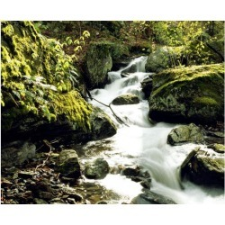 Posterazzi DPI1803925 River with Rocks in The Forest Poster Print by David Chapman, 16 x 13