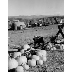 Posterazzi SAL255423882 USA Vermont Caledonia County Peacham Pumpkins & Agricultural Buildings in the Background Poster Print - 18 x 24 in.