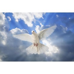 Posterazzi DPI1769607 A Dove in The Sky Poster Print by Don Hammond, 17 x 11