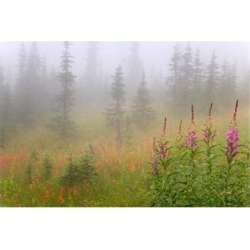 Posterazzi PDDCN02BJA0034 Misty Meadow Scenic Revelstoke National Park British Columbia Canada Print by Jaynes Gallery