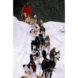 Dog Sled Racing in the 1991 Iditarod Sled Race, Alaska, USA Poster Print by Paul Souders (24 x 36)