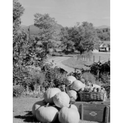 Posterazzi SAL255424073 USA New Hampshire Lancaster Harvested Pumpkins & Apples in Rural Scene Poster Print - 18 x 24 in.
