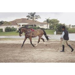Pessoa Lunging System found on Bargain Bro India from equestrian collections for $235.00