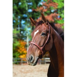 "Shires Plain Cavesson Noseband -1.5"", Black found on Bargain Bro India from equestrian collections for $26.99"