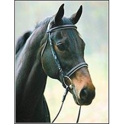 Henri de Rivel Collection Padded Dressage Bridle found on Bargain Bro Philippines from equestrian collections for $81.70