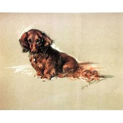 Porter Fine Art Dog Prints   Robin