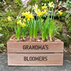 Personalised Small Crate With Daffodil Bulbs