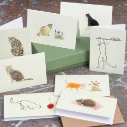 Boxed Collection Of Cat Gift Cards found on Bargain Bro UK from Notonthehighstreet.com for $21.88