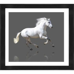Grey Gallop Photographic Print With Frame