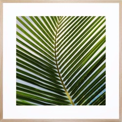Cocos Acrylic Print With Frame