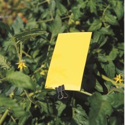 "Yellow Card Sticky Traps, 6"" x 12"""