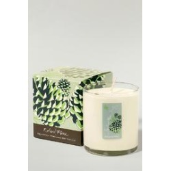 Pine Soy Candle found on Bargain Bro India from Shoptiques for $30.00