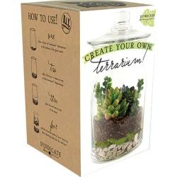 Syndicate Home & Garden Clear Glass Terrarium
