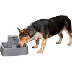 Drinkwell 1-Gallon Pet Fountain