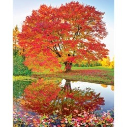 Springbok Puzzles - Maple Reflections - 1000 Piece Jigsaw Puzzle - Large 24 Inches by 30 Inches Puzzle - Made in USA - Unique Cut Interlocking Pieces