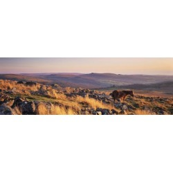 Pony at Staple Tor, Dartmoor, Devon, England Poster Print found on Bargain Bro India from MassGenie for $15.70