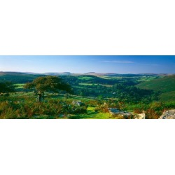 Trees and plants on a landscape, Honeybag Tor, Dartmoor, Devon, England Poster Print found on Bargain Bro India from MassGenie for $27.91