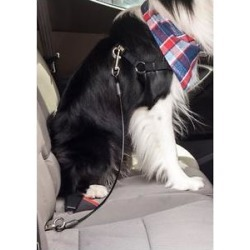 Leashboss Heavy Duty No-Chew Dog Car Restraint Seatbelt, 36-in