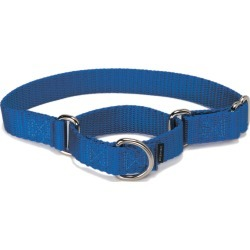 "Martingale Collar Large 1"" Royal Blue found on Bargain Bro Philippines from petsafe.net dynamic for $8.49"