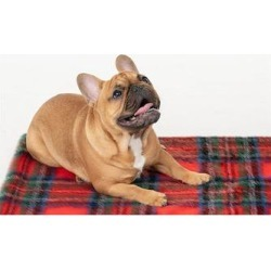Donna Salyers' Fabulous-Faux Furs Women's Pet Beds Red - Red Plaid Pet Throw found on Bargain Bro from zulily.com for USD $31.00