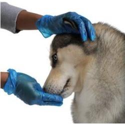 FifthPulse Vinyl Exam Gloves, Blue, Medium, 200 count