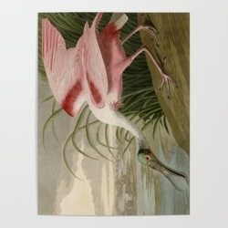 Art Poster | Roseate Spoonbill From Birds Of America By John James Audubon by Art Culture - 18