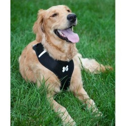 Lucy Belle Pets Pet Harnesses Black - Black Padded Mesh Harness & Lead found on Bargain Bro from zulily.com for USD $6.07