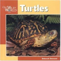 National Book Network Picture Books - Turtles Paperback found on Bargain Bro Philippines from zulily.com for $6.99