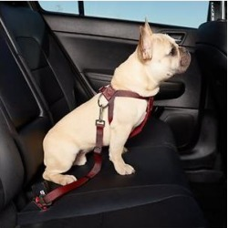HDP Car Dog Harness & Safety Seat Belt Travel Gear, Red, Small found on Bargain Bro India from Chewy.com for $11.99