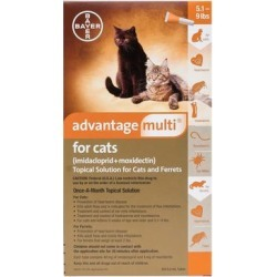 Advantage Multi Kittens & Small Cats Up To 10lbs (Orange) 12 Doses found on Bargain Bro Philippines from Canadapetcare.com for $101.63