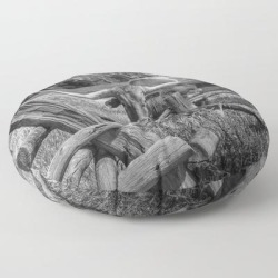 Floor Pillow   Texas Longhorn Steer By An Old Wooden Fence In Black And White by Randy Nyhof - ROUND - 30
