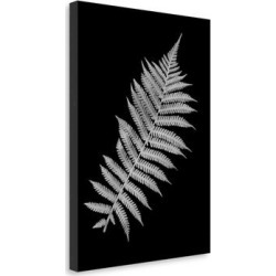 Floral B-W - 18 by Alan Blaustein, Gallery Wrap Canvas found on Bargain Bro Philippines from Overstock for $152.59