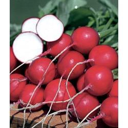 Radish, German Giant Organic 1 Pkt. (1000 Seeds)