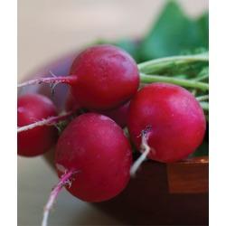 Radish, Crimson Giant 1 Pkt. (1000 seeds)
