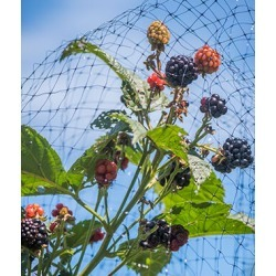 Bird-X Protective Netting for Fruits & Vegetables