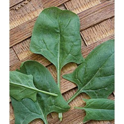 Spinach, Indian Summer Hybrid 1 Pkt. (300 seeds)