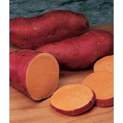 Sweet Potato, Beauregard 1 Pack (25 bareroots)