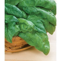 Spinach, Bloomsdale Long Standing 1 Pkt. (1000 seeds)
