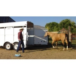 Trailer Loading Your Horse