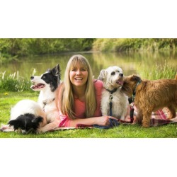 Dog Training - Stop Dog Attacks - Easy Dog Training Methods