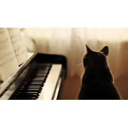 CoolCat Piano, Keyboard, Sight Reading, Theory course