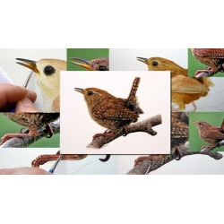 Watercolour Bird Painting - How To Paint a Realistic Wren
