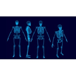 Human Skeletal system Part 1- The upper Limb