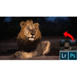 Advanced Lightroom & Photoshop CC for Wildlife Photography