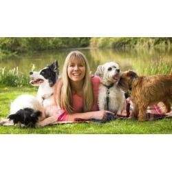 Dog Training - Stop Dog Barking - Easy Dog Training Methods