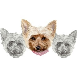How to draw and paint in FREE watercolors this Yorkie puppy.