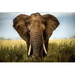 Canvas on Demand Poster Print 24 x 16 entitled Encounters in Serengeti