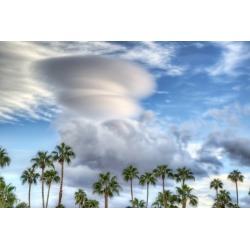 Canvas on Demand Poster Print 24 x 16 entitled Palms on a Cloudy Day, Palm Springs, California