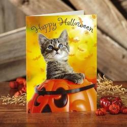 Halloween Kitty Photo Cards