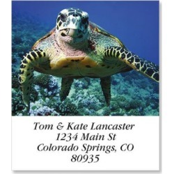 Sea Turtle Select Return Address Labels found on Bargain Bro Philippines from colorfulimages.com for $8.99